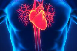 healthcare Human Heart Anatomy Illustration. 3D render